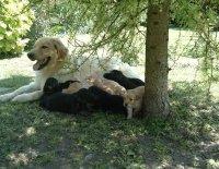 Organizace a selekce v chovu psů – Plemenitba 2. část