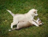 Čím vším může šokovat zájemce o štěně … aneb Má se chovatel smát nebo spíš plakat? 4. díl