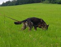 Stopařská poradna – Musí být můj pes nutně hladový?