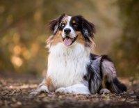 Organizace a selekce v chovu psů – řízení chovu