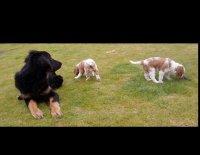 Čím vším může šokovat zájemce o štěně … aneb Má se chovatel smát nebo spíš plakat? 5.díl