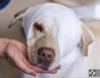Vnější poranění – rány a poskytnutí první pomoci