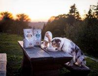 Brit Fresh: Nová řada krmiv pro psy s čerstvým masem