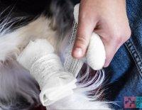Testujeme za vás... Seminář první pomoci pro psy