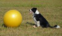 Blok I: Lekce 3: Vyslání za míč a směrování