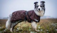 Péče o psa v chladném počasí – oblékat nebo neoblékat?