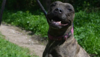 Pomozte nám při hledání psů z Bull Azylu v Čáslavi!