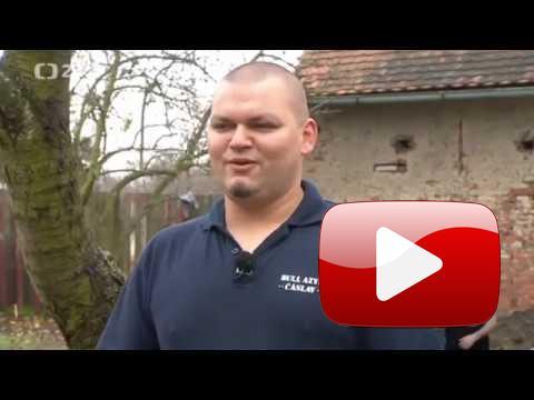 Bull Azyl Čáslav | Chcete mě | Richard Kaudl