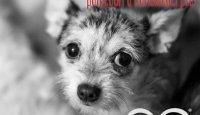 Člověk a pes – nový projekt, který pomáhá vychovávat budoucí generaci!!!