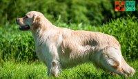 Domácí psí fitness – možnosti v domácím posilování psa