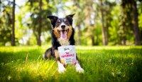 Nové pamlsky Brit Functional Snack chutnají a pomáhají zlepšit zdraví psů