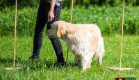 Domácí psí fitness - cviky, které by měl pes zvládnout před nástupem balančního cvičení II.