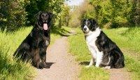Základní povely, kterým by měl pes rozumět…