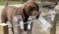 Jak posilovat inteligenci psa?