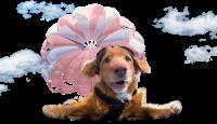 Konference Pejskárium II. Mise: Šťastný pes!