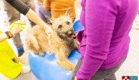 Domácí psí fitness – základní cviky na balónech