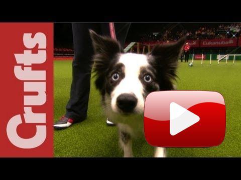 Když musíš, tak musíš...  Znáte ten pocit, když vyběhnete na soutěži a váš pes se začne venčit?