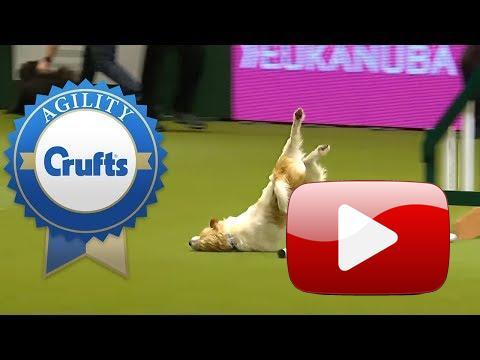 Když je pes moc hrr...  Rychlost k agility patří, co když ale je rychlý až moc...?