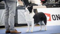 Pohled do historie psích výstav
