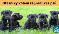 Otazníky kolem reprodukce psů!