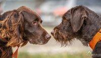 Veterinární poradna – Může se pes nakazit koronavirem?