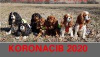 KORONACIB 2020!!!