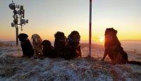 Dog & sunrise – corona challenge 2020