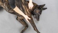 Domácí psí fitness – Pasivní protahování
