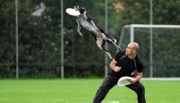 Od koláčů po létající psy aneb Co vlastně je to dogfrisbee? – 1. díl