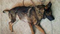 Poradna první pomoci – Jak pomoci psu, když...?