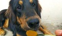 Zlatá pasta (nejen) pro psí seniory