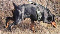 V mantrailingu by se pes měl spoléhat jen sám na sebe!