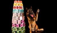 Chtěli byste vyhrát adventní balíček pro svého psa?