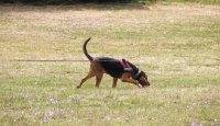 Základní vzory chování psa na trailu 7. díl