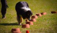 Nosework – malé opáčko na závěr 4. díl