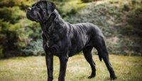 Délku života psů lze významně prodloužit!
