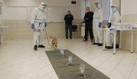 První šestice psů umí detekovat Covid-19!