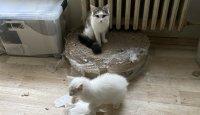 Z nevhodných podmínek v bytě v Horních Počernicích bylo odebráno přes 40 koček