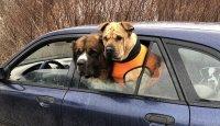 Nepodceňujte bezpečnost psa autě! – 1. díl
