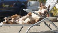 Pět horkých letních tipů