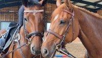 Ráj pro koně i jejich majitele!