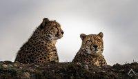 Co se skrývá pod pokličkou zákona o zoologických zahradách?