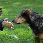 Výchova a výcvik rodinných psů