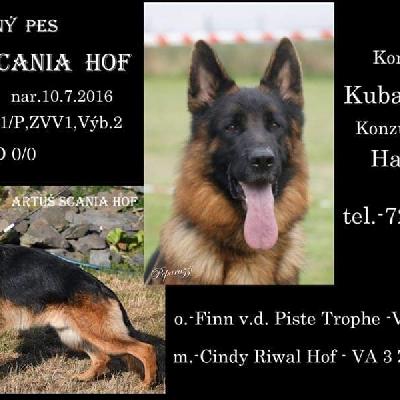 Chovný pes Artuš-Scania Hof