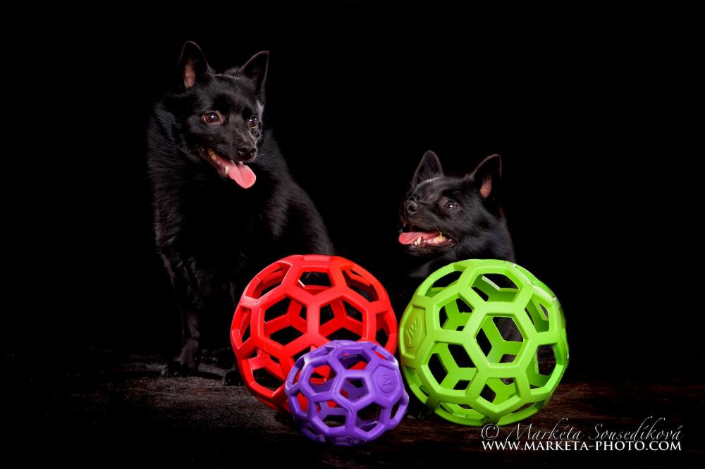 Děrovaný míč váš pes rozhodně potřebuje!