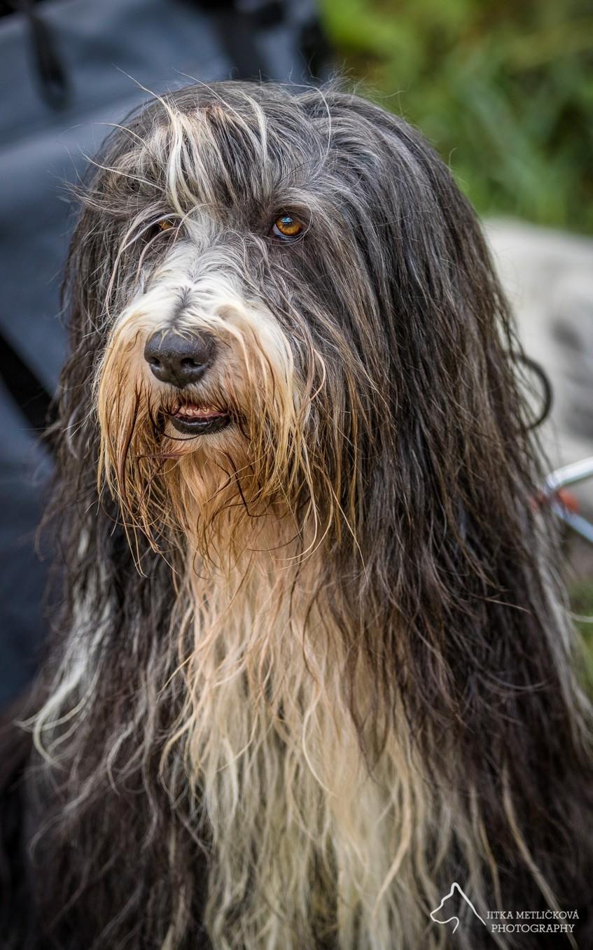 Čím vším může šokovat zájemce o štěně … aneb Má se chovatel smát nebo spíš plakat? 7.díl