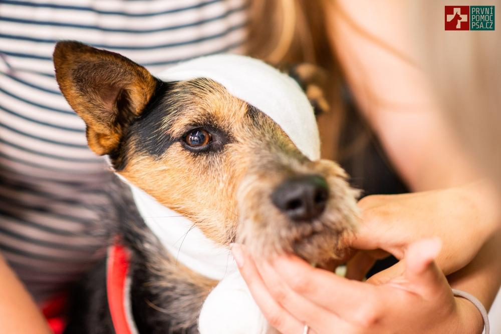 Osiny – nebezpečí pro naše psí mazlíčky!