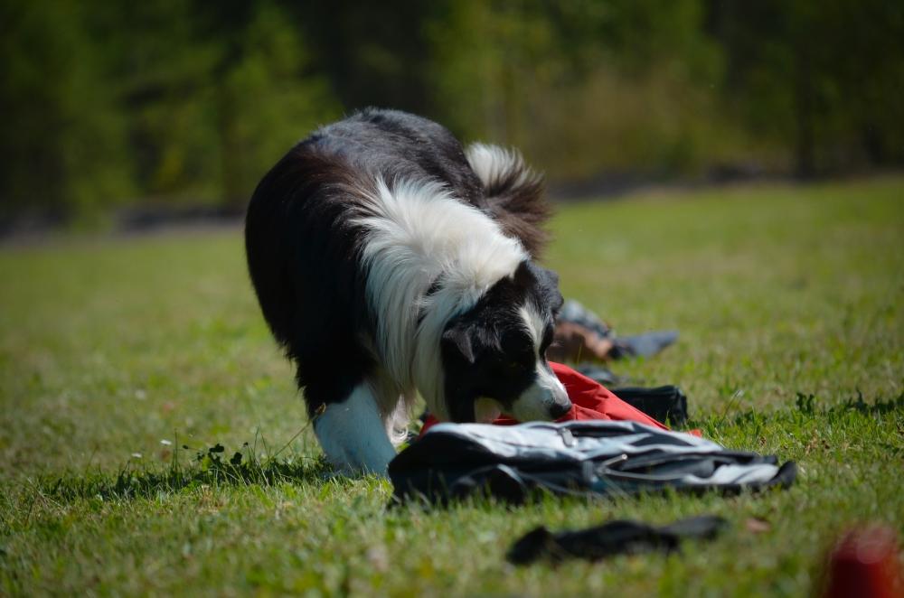 Zábava i sport pro všechny – to je nosework! 1. díl