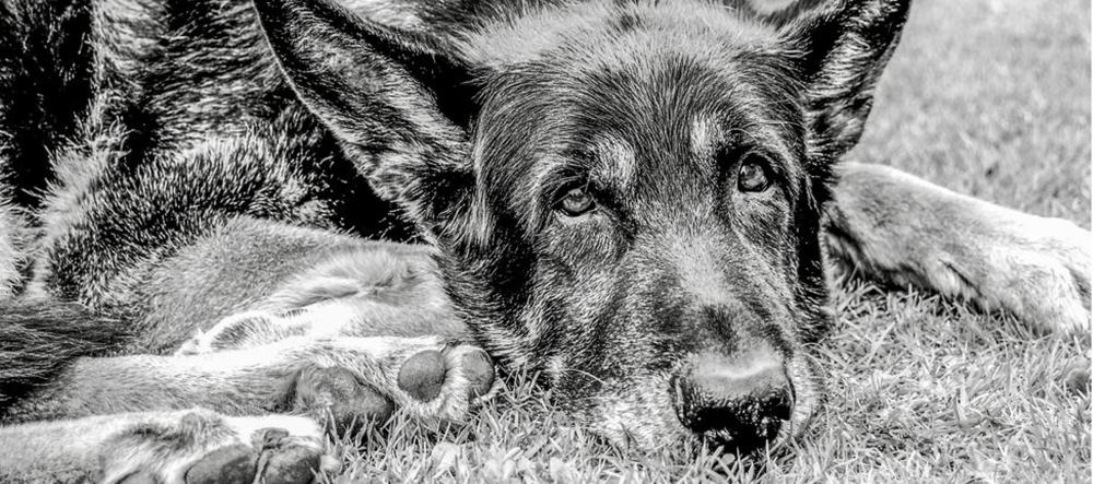 Křest knihy Egon: Děsná psina