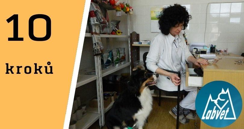 Deset kroků, jak snížit stres z návštěvy veterináře…